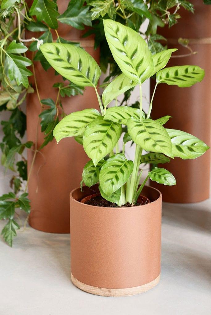 plant collectors p1010149