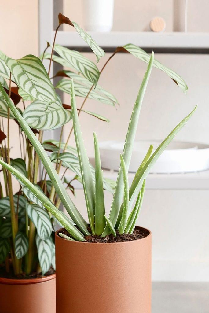 plant collectors p1010150