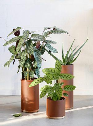 Plant Collectors door Arjan van Raadshooven & Anieke Branderhorst